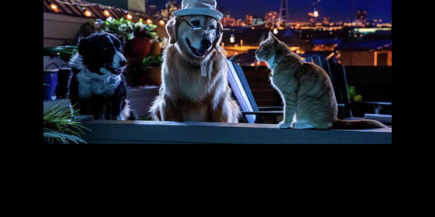 Slider-como-perros-y-gatos-3